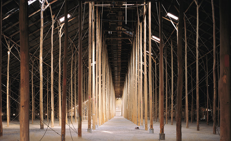 A colour photograph of the interior of the Murtoa Grain Store features rows of tall slender timber polls set into the ground. The number and height of the polls create a tunnelling effect. Timber trusses set atop the polls hold the roof with the occasional skylight illuminating the interior.